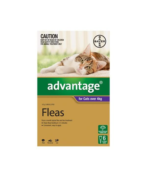ADVANTAGE CAT > 4KG PURPLE 6s
