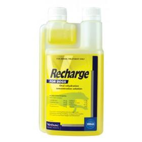 Recharge Greyhound 500ml