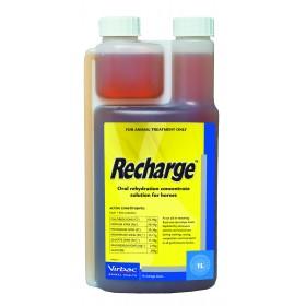 Recharge Horse 1L
